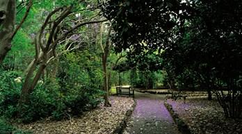 Jardín Botánico Viera and Clavijo