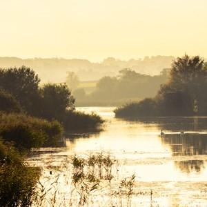 Sunny wetlands / IanRedding/Shutterstock.com