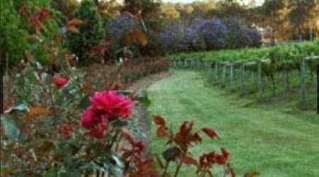 Cassegrain Wines and Seasons