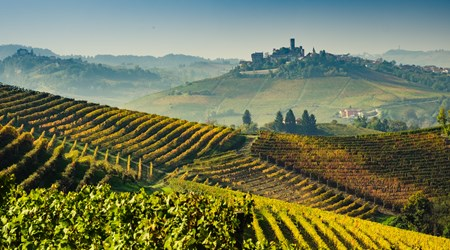 Langhe Wine Tours