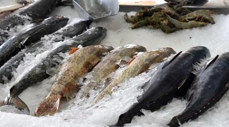 Central Fish Market