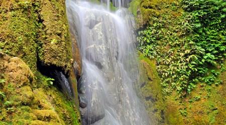 Evergreen Mele Cascades