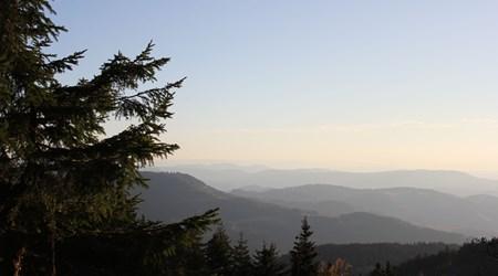Black Forest National Park