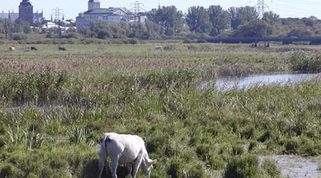 Isternäset – nature reserve