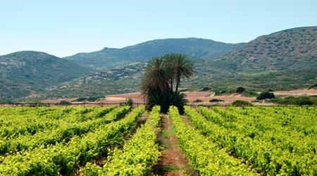 Toplou Monastery Winery