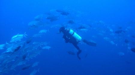 Sea Experience