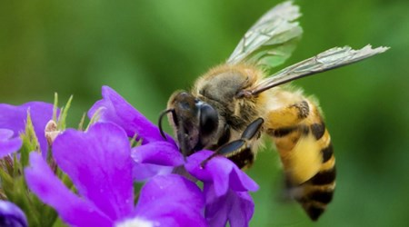 Clayridge Honey