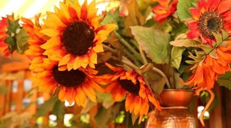 Sunflower Caffé