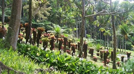 Balata Botanical Gardens