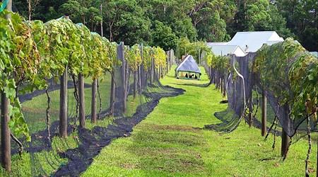 Lyrebird Ridge Organic Winery