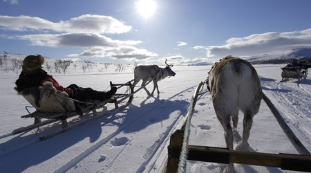 Sleigh ride with reindeer