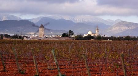 Binissalem Wine Village