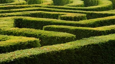 The Bellingham Maze
