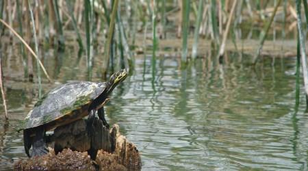 TurtleFest