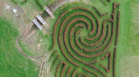 Bago Vineyards and Maze