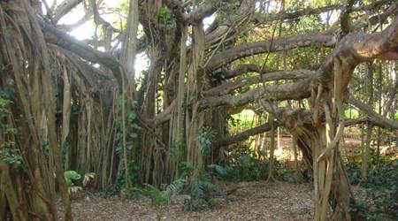 Rockhampton Botanic Gardens and Zoo