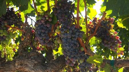 Turtle Rock Ridge Vineyard Winery