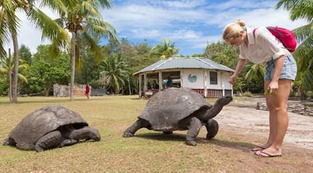 Curieuse Island Tortoise Farm