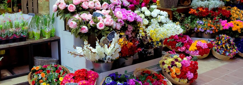 Outdoor flower market in Nice at night, France