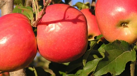Wilgro Orchards