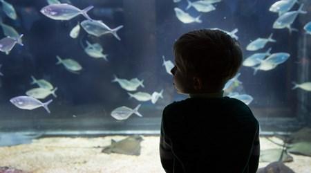 The North Carolina Aquarium at Pine Knoll Shores