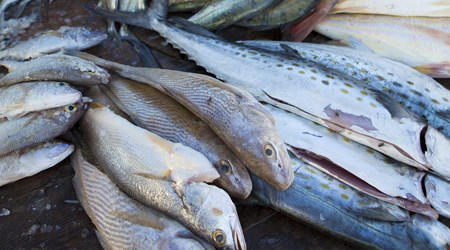 Zihuatanejo Fish Market