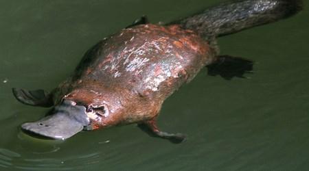 Bombala Platypus Reserve