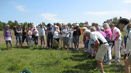 The Öland Guides