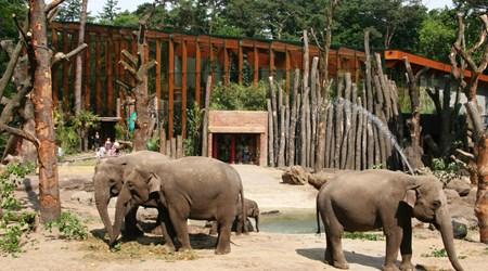 DierenPark Amersfoort (Zoo)