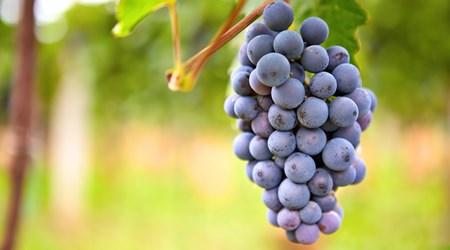 Javelina Leap Vineyard & Winery