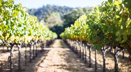 Taste of Sonoma (Sonoma Wine Country Weekend)