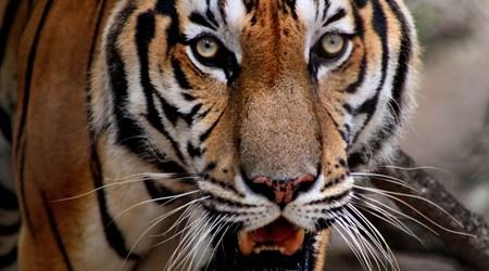 Phnom Tamao Zoological Park and Wildlife Rescue Center (PTWRC)