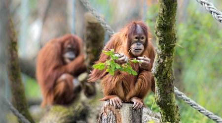 10 Basel Zoo: for animal lovers and explorers.
