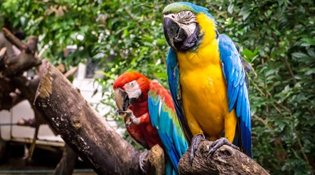 Parrot Jungle Island
