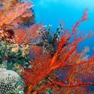Blue Paradise Diving Centre