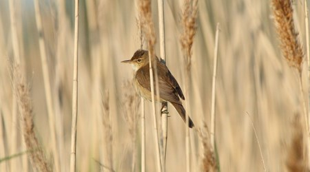 Getteröns Naturum - Bird Sanctuary