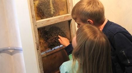 Skogens Honung