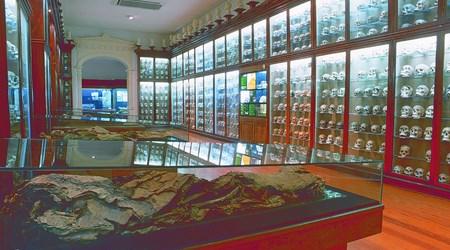 Las Palmas de Gran Canaria museums