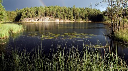 Finnish Lakes and Forests