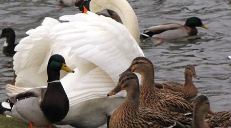 North Blackpool Pond Trail