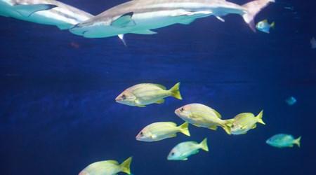 Vancouver Aquarium Marine Science Centre