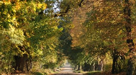"""""""Puszcza Zielonka"""" Landscape Park"""