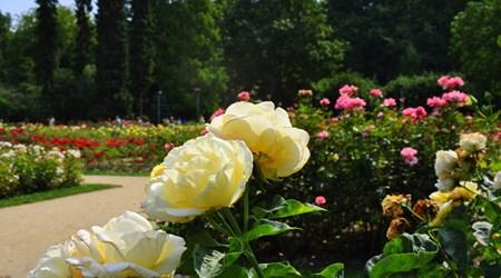 Rose Garden 'Rozanka'