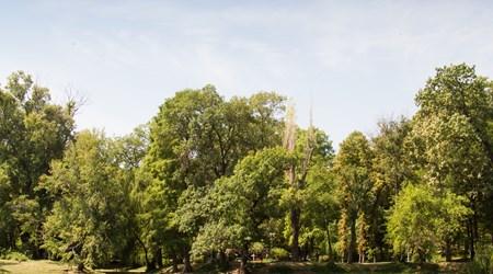 Carol Park