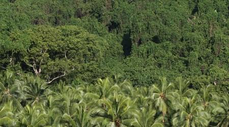 Malekula Island