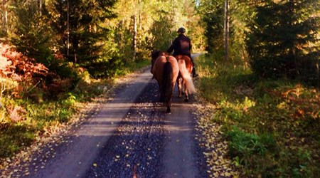 Cason Islandshästar/Icelandic horses
