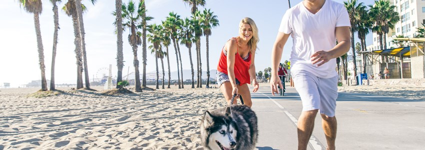 Beautiful couple skating with dog on ocean walk front during a summer vacation - Cheerful happy friends doing sport activity on the beach