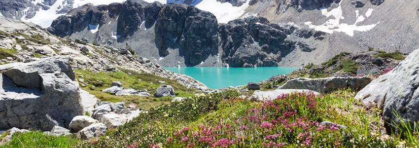 Vertical shot of turquoise Wedgemount Lake and wild alpine flowers, Whistler, BC
