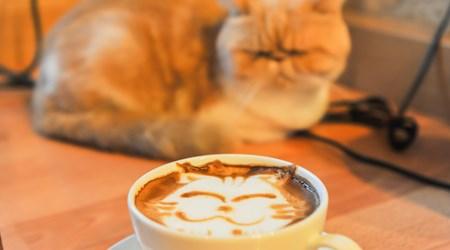 Cat Café Nekorobi