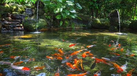 Lake Gardens (taman Tasik Perdana)